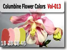 Columbine Flower Polymer Clay Color Palette
