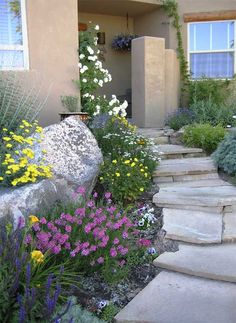 Mixing rock with flowers and succulants