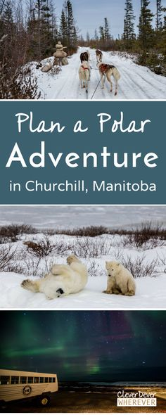 Want to see Polar Bears in Canada? Read this to help plan your trip to Churchill!