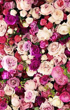 Ideas Wall Paper Floral Laptop Flower For 2019 Flowers Nature, My Flower, Pretty Flowers, Flower Art, Flower Phone Wallpaper, Iphone Wallpaper, Kate Spade Wallpaper, Flower Backgrounds, Wallpaper Backgrounds