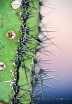 Cactus at sunset