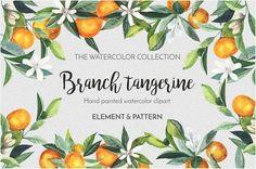 Watercolor branch targerine by Youksy on @creativemarket