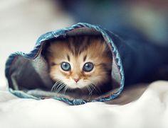 foto gattino più tenero del mondo (1)