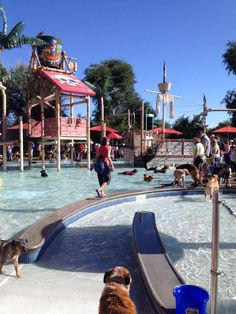 How cool its this!  A dog water park!