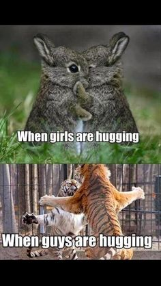 24 best Funny Memes images & Hilarious Pictures If you're having a hard week. We know that the world is strange, but cute funny memes cat and funny pictures Funny Animal Jokes, Cute Funny Animals, Funny Animal Pictures, Funny Cute, Funny Dogs, Haha Funny, Funny Stuff, Funny Animal Sayings, Hilarious Pictures