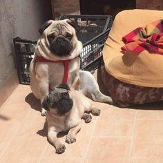 Sakira è la nuova cagnolina di Teresa Cilia e Salvatore di Carlo