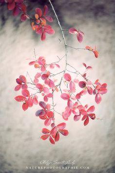 Autumn Poetry.jpg