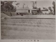 """""""Coffee Drying, Guatemala"""", Juvenile Encyclopedia, 1932 Vol. 14 World Geography 兒童百科大辭典 第十四巻 地理篇(三) 玉川學園出版部 昭和七年"""