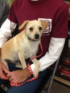 Meet Oso!  He is a terrier mix that weighs about 15 lbs and is a little shy when first meeting new people, but he is very sweet.  He is just turning a year old, loves to play with toys and is great around other dogs and cats as well.He might not be...