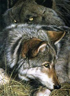 There's someone in the wolf Wolf Spirit, Spirit Animal, Wolf Pictures, Animal Pictures, Beautiful Creatures, Animals Beautiful, Malamute, Animals And Pets, Cute Animals