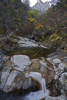 Last remnants of autumn in Gangwon-do Province.  http://www.mattmacdonaldphoto.com