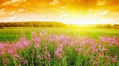 Flowers In Hd Wallpapers Flowers Hd Wallpaper Wallpapers)