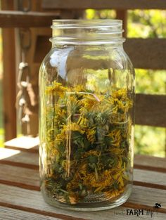 Jar of Dandelions for Tea