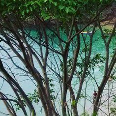 Desejo Paz muito verde muita beleza em 2017.