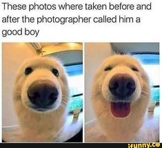 These funny videos of funny dogs will make you laugh. Hope you enjoy these funny dog videos. This funny dogs compilation doesn't include funny dog vines. Animal Jokes, Funny Animal Memes, Dog Memes, Funny Animal Pictures, Funny Memes, Animal Memes Clean, Dog Pictures, Funny Dog Pics, Cat Memes Clean