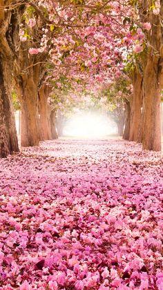 ピンクの産業の花、道、木々、美しい風景 iPhone 5 (5S) (5C) (SE) の壁紙 - 640x1136