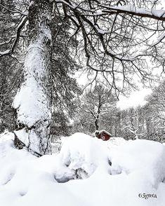 Winter wonderland ❄ Tønsberg/Norway