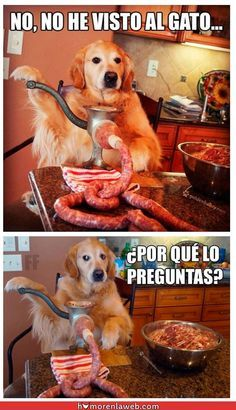 """""""No he visto al #gato, ¿por qué lo preguntas? #perro #embutido"""