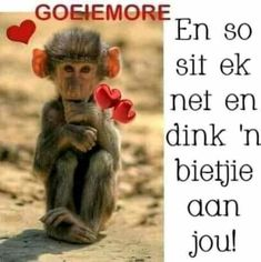 En so sit ek net en dink ń bietjie aan jou. True Friends, Best Friends, Afrikaanse Quotes, Goeie More, Good Morning Wishes, Morning Quotes, Friendship Quotes, Animals And Pets, Quotations