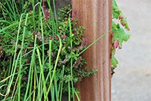 tuin ideeen, verticaal tuinieren, Kruidentuin, Moestuin, Bloementuin, Verticaal tuinieren zakken, Verticaal tuinieren binnen, Verticaal tuinieren