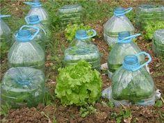 Arquitetura Sustentavel: Política dos 5 R& e Consumo Consciente - Backyard Vegetable Gardens, Veg Garden, Vegetable Garden Design, Fruit Garden, Edible Garden, Garden Beds, Garden Crafts, Diy Garden Decor, Garden Projects