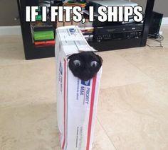 i haz a postal service