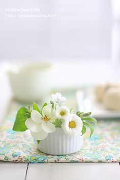 Image uploaded by The Marquise. Find images and videos on We Heart It - the app to get lost in what you love. Flowers Nature, Green Flowers, My Flower, Spring Flowers, White Flowers, Flower Art, Beautiful Flowers, Cactus Flower, Flowers Garden