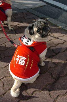 Japanese Pet Dog's Costume