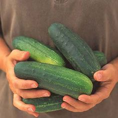 Home Depot and Martha Stewart Guide to growing cucumbers.