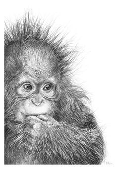 5 Greetings Cards, Baby Orangutan Drawing, Orangutan gift, animal greetings card, orangutan baby, cute greetings cards, wildlife art