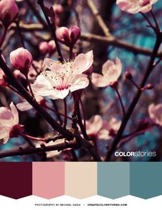 Color Stories: Sakura #color Palette #cherryblossom #springcolorpalette #pinkbluecolorpalette #patonecolorpaletteoftheyear #springcolorpalette #colorstoriesblog