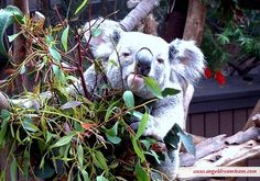 Rise and shine sleepy heads  Today starts a whole new week and your dreams might be waiting for you just around the corner  Go and find them!  #angelladytm #angels #goodmorning #sleepy #koala #love #start #dreams #positive by angelladytm