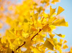 yellow things by angeloangelo, via Flickr