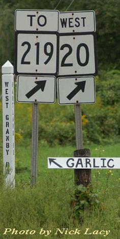 The Garlic Farm | Tips for growing garlic at home