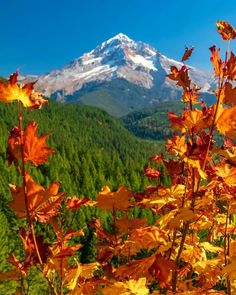 Artsy Photos, Autumn Scenery, Autumn Leaves, Color Change, Oregon, Beautiful Pictures, Mountains, Fall, Travel