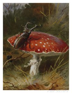 Stag Beetle on a Toadstool, 1928 Posters by Archibald Thorburn at AllPosters.com