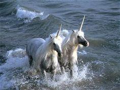 Unicorns by Vavra  The Last Unicorn was REAL beezies  xDDD