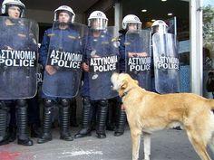KANELLOS, the riot dog...! www.reddit.com