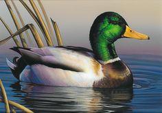 Watercolor Bird, Watercolor Animals, Most Beautiful Animals, Beautiful Birds, Animals And Pets, Cute Animals, Duck And Ducklings, Duck Art, Tier Fotos