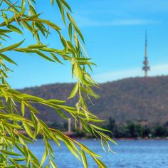 """Instagrammer turagan speaks the truth when he says that """"everywhere you go in Canberra you'll always get a glimpse of Black Mountain Tower"""". #visitcanberra"""