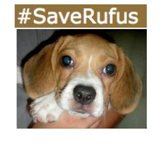 Social Media Attempts To Save Man's Best Friend From Euthanasia   ... from PetsLady.com ... The FUN site for Animal Lovers | via @roncallari