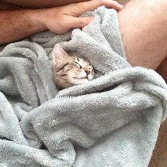 Sleepy cat...