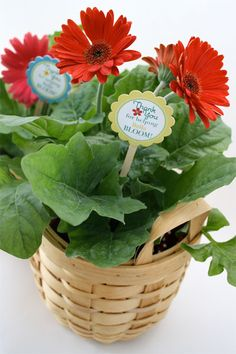 Teacher Appreciation Gift ~ Flowers with Teacher Appreciation Flower Picks