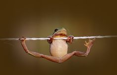 That frog should totally be a gymnastics champion
