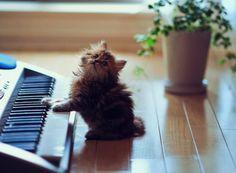 Kitten on the keys!