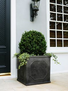 boxwood in pots with ivy for the front porch