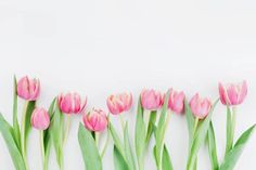 pink tulip flowers for spring background top view in flat lay style
