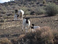 Karoo. South Afrika, Passion Photography, Sheep Farm, Out Of Africa, Farm Yard, My Land, Heartland, Farm Life, Homeland
