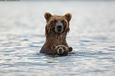 Cute Wild Animal Parents