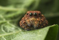 Cute Spider by Asher Lwin on 500px